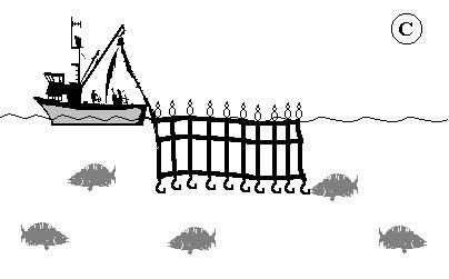 Pesca de palangre