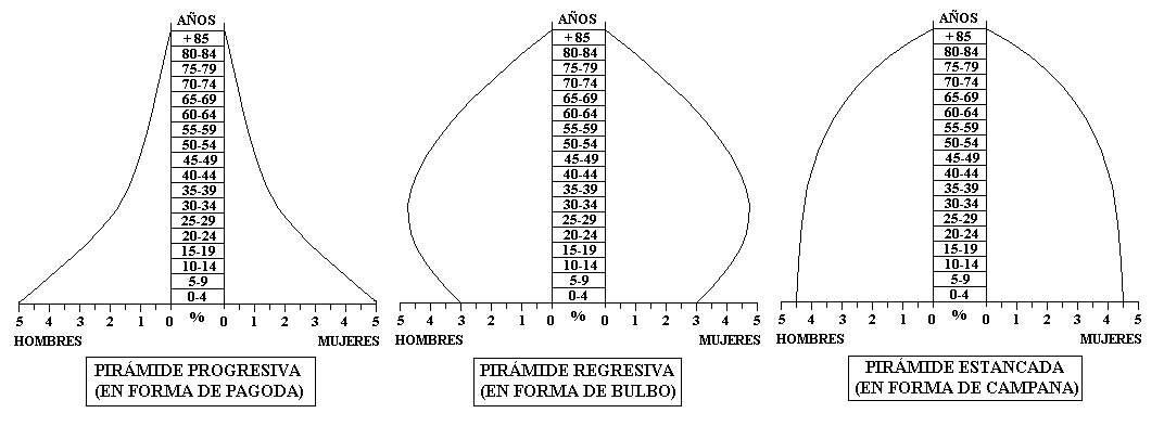 Gráfico 11